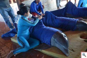 cuba irma 2017 cuba dolphins